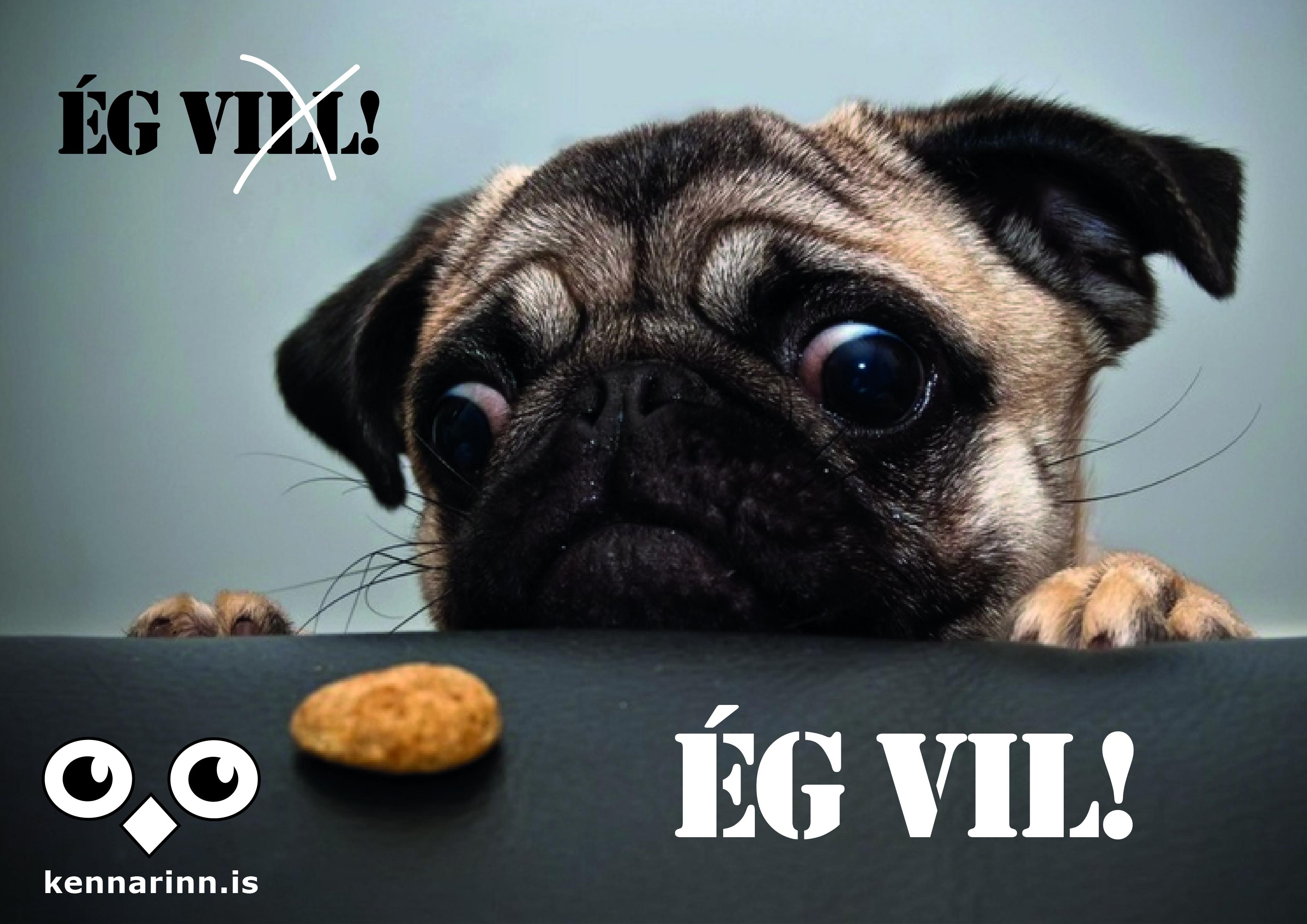 eg_vil-01