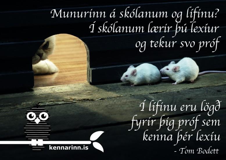 Skólinn og lífið